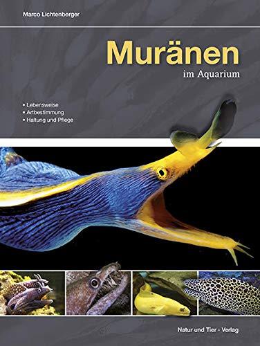 Muränen im Aquarium: Lebensweise, Artbestimmung, Haltung und Pflege