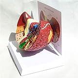ZAMAX Modelo de Estudio Estructura Ciencia Anatomía Modelos viscerales Modelo anatómico de hígado patológico anatómico 3D Modelo de Entrenamiento Educativo médico Modelo de hígado Humano