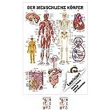 Sport-Tec Der menschliche Körper Mini-Poster Anatomie