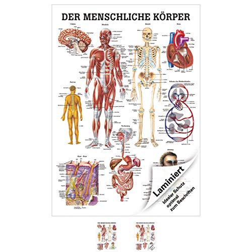 Sport-Tec Der menschliche Körper Mini-Poster Anatomie 34x24 cm medizinische Lehrmittel