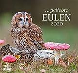 ... geliebte Eulen 2020 - DuMont Wandkalender - mit den wichtigsten Feiertagen - Format 38,0 x 35,5 cm