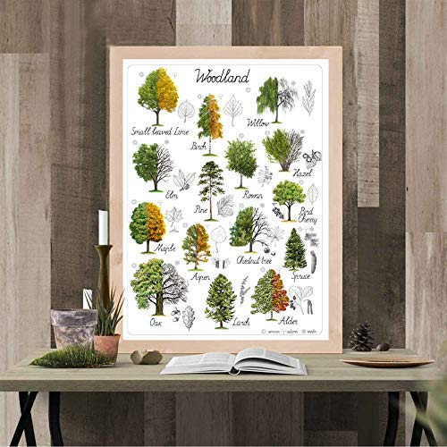BailongXiao Pädagogische natürliche Baumplakat Leinwanddruck Kunst Wald Home Wanddekoration Pflanze,Rahmenlose Malerei,60x90cm