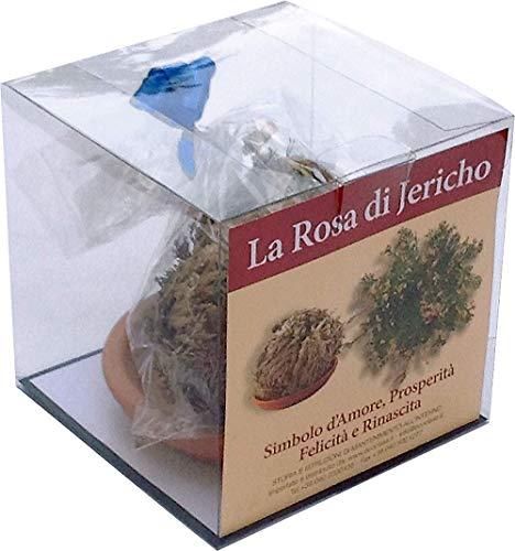 Ecoclass - Rosa de Jericó caja de regalo + pote