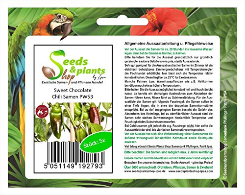 Stk - 5x Sweet Chocolate- Samen Küche Garten Chili samen Paprika PW53 - Seeds Plants Shop Samenbank Pfullingen Patrik Ipsa