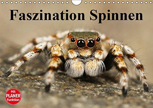 Faszination Spinnen (Wandkalender 2019 DIN A4 quer): Die achtbeinigen Webkünstler aus der Nähe (Geburtstagskalender, 14 Seiten ) (CALVENDO Tiere)