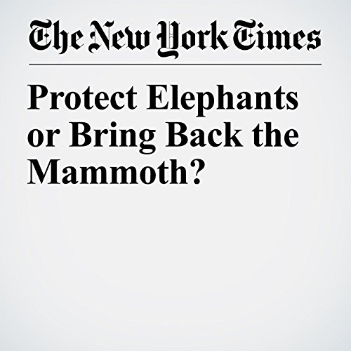 Protect Elephants or Bring Back the Mammoth? copertina
