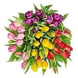 """100 Bulbi di tulipani olandesi """"in Mix"""" (Tulipa) Colore: Mix di Colori bulbi formato superiore: 12/+ Direttamente dall'Olanda SPEDIZIONE GRATUITA! Istruzioni che piantano incluse"""