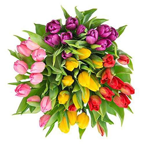 100 Bulbes de tulipes\