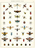Cavallini & Co. Natural History Insects Decorative