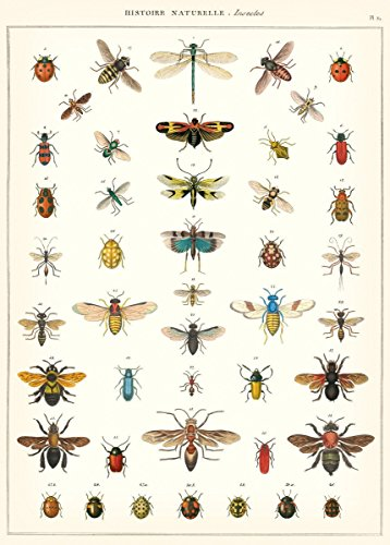 Cavallini & Co. Natural History Insects Decorative Decoupage Poster Wrapping Paper Sheet