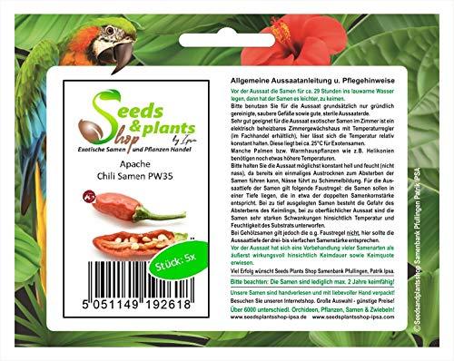 Stk - 5x Apache- Samen Chili Saatgut Küche Garten Chili samen PW35 - Seeds Plants Shop Samenbank Pfullingen Patrik Ipsa