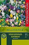 mgc24® Blumenzwiebelmischung zur Verwilderung - 200...