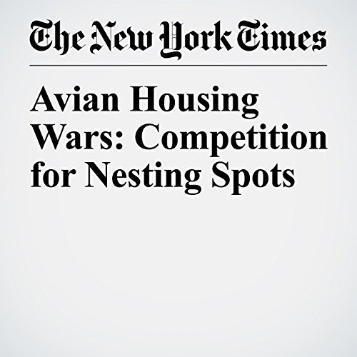 Avian Housing Wars: Competition for Nesting Spots copertina