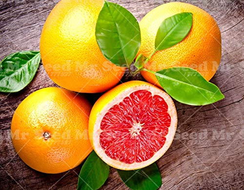 20pcs Pomelo Citrus Bonsai Pflanze orange Fruchtpflanzen Grapefruit Seltene Frucht für Hausgarten-DIY Pflanz Bonsai: Mix