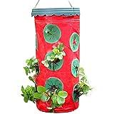 liteness - borsa per coltivare fragole, fragole, erbe, prezzemolo, origano, basilico, rosmarino