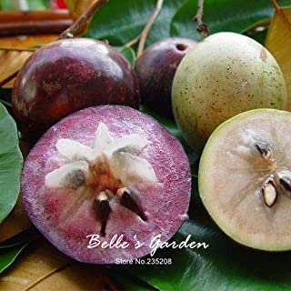 Best star apple seeds Reviews