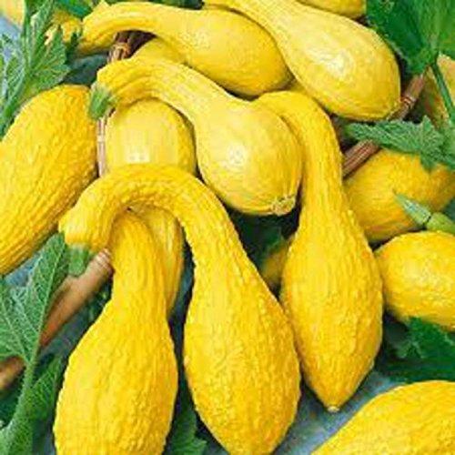 ASTONISH Semi Pacchetto: 30 semi: Zucchino estivo, crookneck gialla, non OGM, Varietà Taglie Venduto, spedizione gratuita
