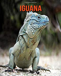 Iguana: Amazing Facts about Iguana