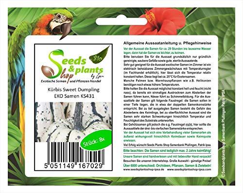 Stk - 8x Kürbis Sweet Dumpling EKO - Kürbis Samen Gemüse Garten Pflanze KS431 - Seeds Plants Shop Samenbank Pfullingen Patrik Ipsa