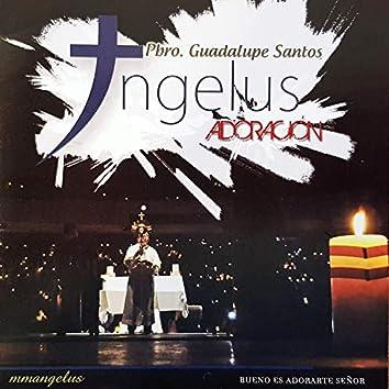 Angelus Adoración - Gloria toda gloria y quiero adorarte
