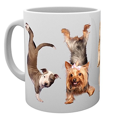 GB Eye Ltd, Yoga, Dogs 4 Dogs, Tazza