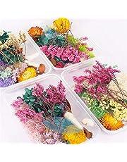 SHUAISHUAI Simulering 1 låda äkta torkad blomma torra växter för aromaterapi ljus epoxiharts hänge halsband smycken tillverkning hantverk gör-det-själv-tillbehör