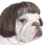 JOIUJmz Conjunto de Cabello Fotografía Accesorios Divertidos Accesorios para la Cabeza Fiesta de Halloween para Mascotas Disfraces Suministros para Disfraces Juguetes (C)