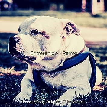 Entretenido - Perros