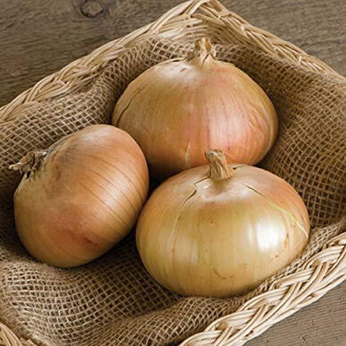 David's Garden Seeds Onion Intermediate-Day Onion Bridger 9811 (Brown) 200 Non-GMO, Hybrid Seeds