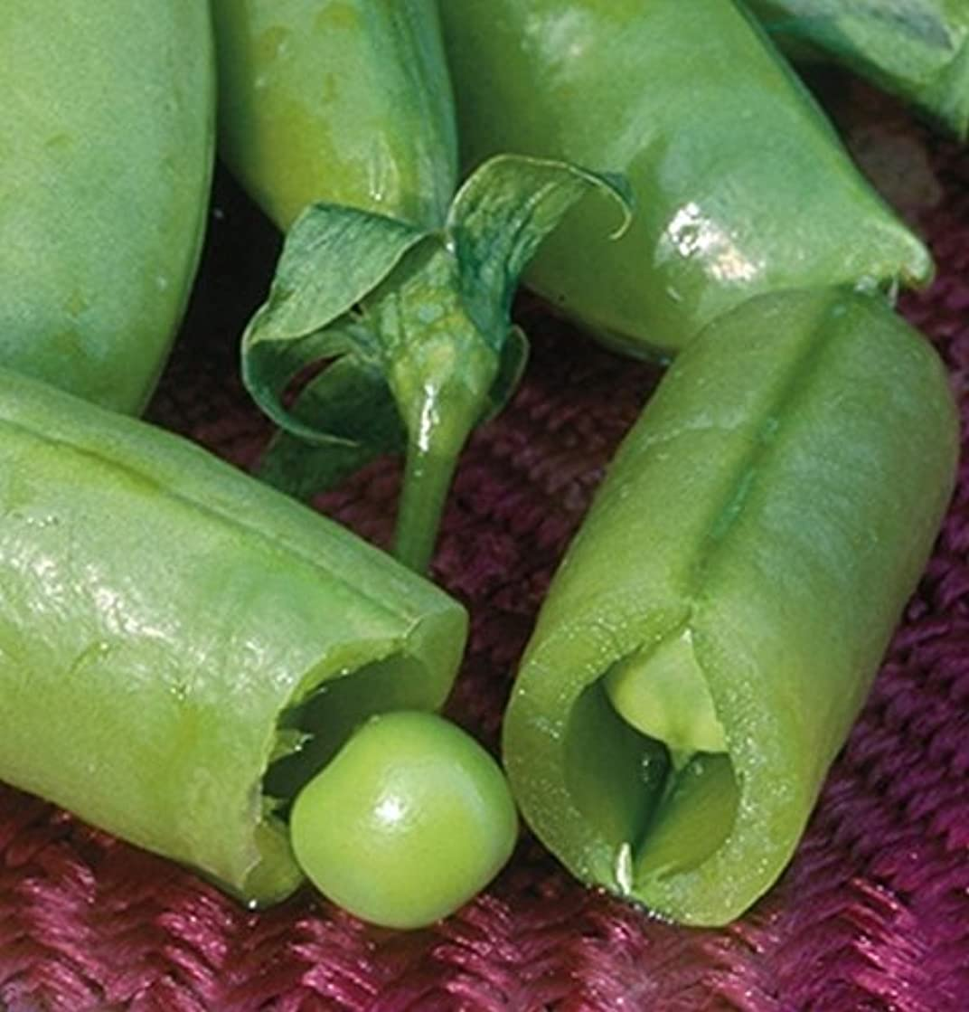 Sugar Snap Pea Seeds - Thick, full-size, SWEET & Crunchy
