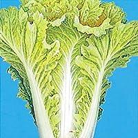 国華園 種 野菜たね 健康野菜 黄葉山東菜 1袋(10ml)/メール便配送 21年春商品