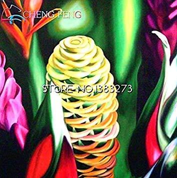 ASTONISH GRAINES D'ASTONIE: Brown: 50pcs / lot Crape Ginger Graines Costus Speciosus Malaise Ginger Fleurs Plantes Bonsai japonais Graines de fleurs rares Accueil Jardin Cadeau Pot