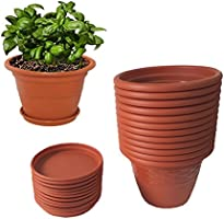 Up to 50% off: Live Plants and Planters