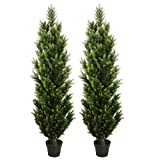 THE BLOOM TIMES 2 Pack 5 Foot...