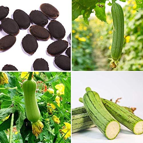 Acecoree Samen Haus 20 Stücke Starke Anpassungsfähigkeit Jährliche Crop Grün Gemüse Luffa Samen