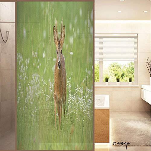 YOLIYANA 3D No Glue Static Decorative Privacy Window Films, Young Roe Deer, Capreolus Capreolus, Buck Walking Towards Camera Surrou W23.6xH47.2in, Privacy Decorative Glass Film No16060