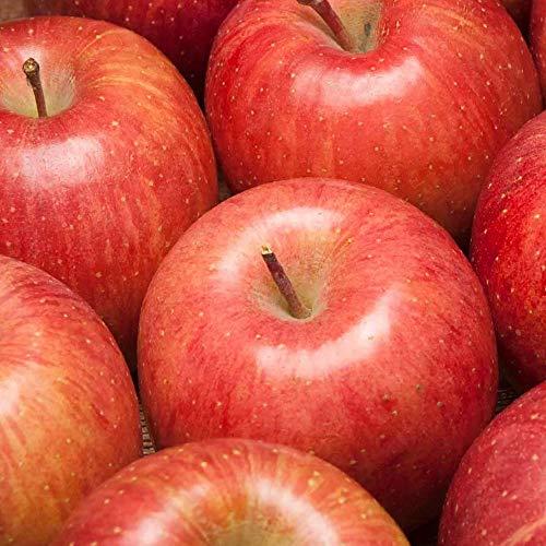 早生りんご(赤) A品 5kg箱 特別栽培(無・無) (青森県 北上農園) 産地直送 ふるさと21
