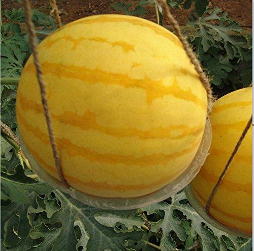 Livraison gratuite 11 des espèces rares Graines de pastèque chinoise à choisir délicieux fruits Melon d'eau graines bonsaïs - 50 Pièces 11