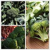 Semi di broccoli (biologici) -Semi di cavolfiore bianco verde calabrese, palla di neve deliziosa e sana (verde)