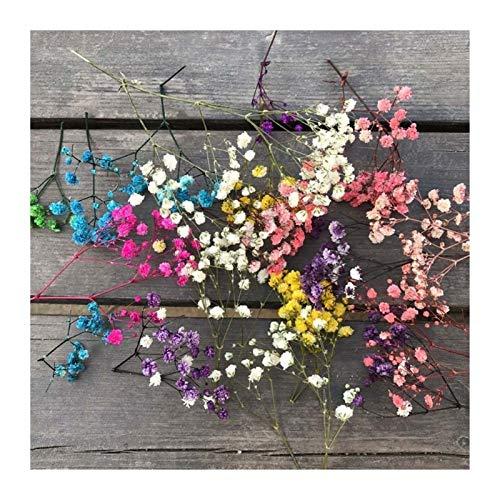 HETHYAN Getrocknete Blumen-10g...