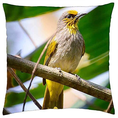 BXBX Funda de Almohada (18 x 18 Pulgadas) - Birds Yellow Twigs