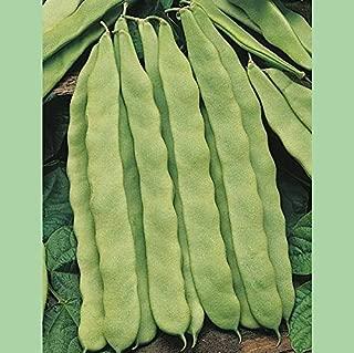 Kings Seeds - Climbing French Bean Hunter - 100 Seeds