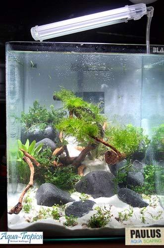 Blau Aquaristic - Nano-Aquarium Cubic 10 Liter - Starter Komplettset mit 3-Kanal LED Lampe, Hängefilter, Abdeckscheibe, Schaumstoffunterlage