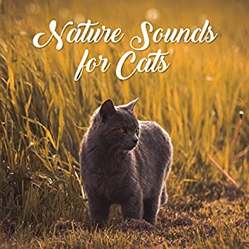 Nature Sounds for Cats: Relaxing Music Therapy, Blissful Songs for Sleep, Relax, Cat Relaxation, Music Reduces Stress, Bird Sounds