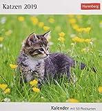 Katzen - Kalender 2019: Kalender mit 53 Postkarten
