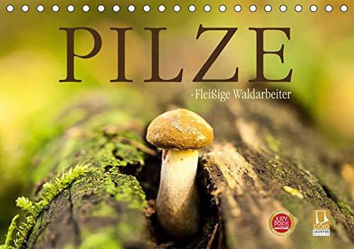 Pilze - fleißige Waldarbeiter (Tischkalender 2019 DIN A5 quer): Sie heißen Satan, Schweinsohr, Fliegen oder Knollenblätter: Pilze. (Monatskalender, 14 Seiten ) (CALVENDO Natur)
