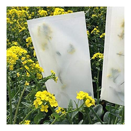 YQUC High Density 100pcs Wheat Corn Paper Bag Fruit Bagging Agricultural Crops Pollination Breeding Parchment Bags Raising Pouch (Color : White, Size : 22 x 11cm)