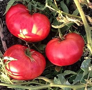 Heirloom Organic German Pink Tomato 200 Seeds
