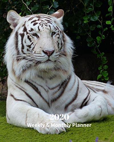 2020 Weekly and Monthly Planner: White Tiger- Monthly Calendar with U.S./UK/ Canadian/Christian/Jewish/Muslim Holidays– Calendar in Review/Notes 8 x 10 in.- Big Cats Animals Nature
