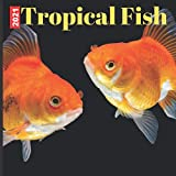 Tropical Fish: 2021 Wall Calendar 12 Months - Fish Tropical